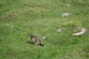 12murmeltier ausflug nach savoyen august 2018 30