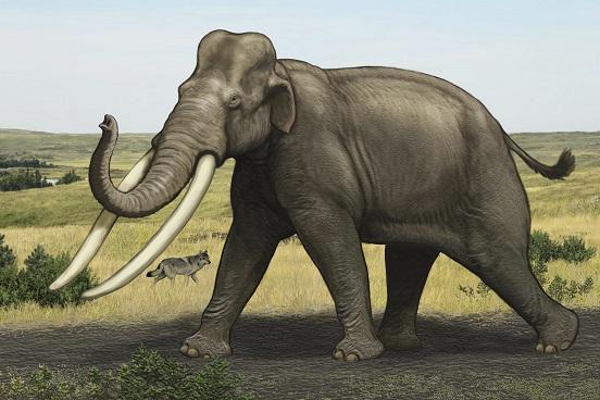 Solche Europäischen Waldelefanten waren einst auch in Mitteleuropa zuhause Grafik: Carl Buell
